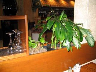 Olive Garden BEFORE